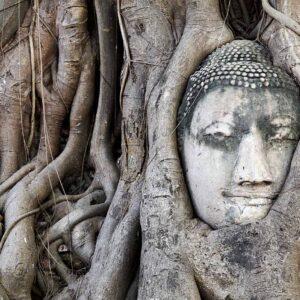 Tailândia, cabeça de Buda entrelaçada nas raízes de uma árvore de Wat Mahathat em Ayutthaya)